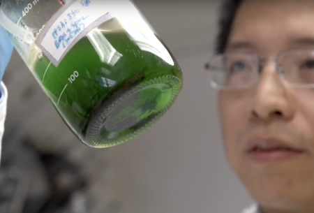 Yousong Ding observes a cyanobacteria culture