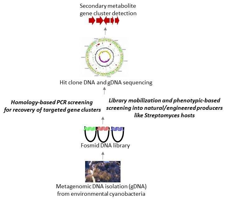 Microbial Genomics